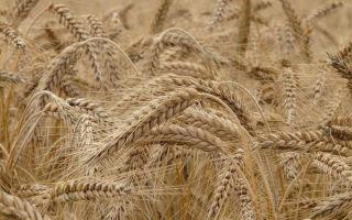 Общая долевая собственность на земельный участок 2020 — право, сельхозназначения, раздел, распоряжение, как выдлеить