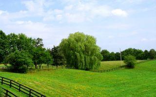 Оспаривание кадастровой стоимости земельного участка 2020 — документы, порядок, процедура, срок, заявление
