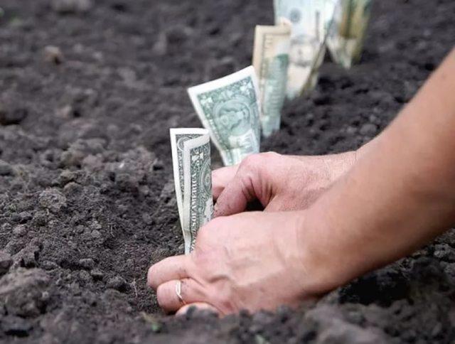 Земельный налог для ИП 2020 - сдают ли декларацию, уплата
