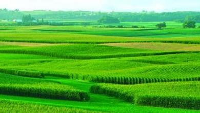Назначение земельных участков 2020 - целевое, виды, изменение, как поменять
