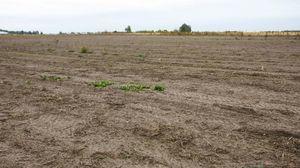 Право собственности на земельный участок 2020 - регистрация, отказ, свидетельство, оформление