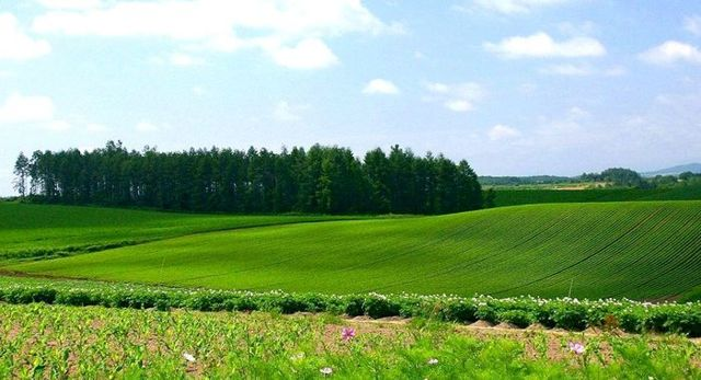 Оценка рыночной стоимости земельного участка 2020 - основные методы