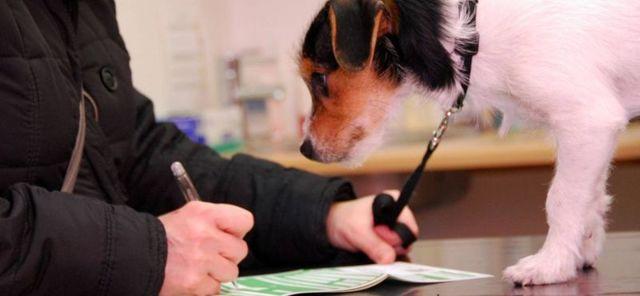 Содержание собак в многоквартирном доме 2020 - правила, закон